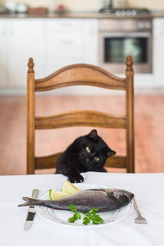 黒猫「Cat ストレッチへの魚のテーブル」:スマホ壁紙(12)