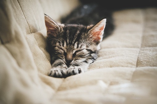 Stretching「Cat stretching on a sofa」:スマホ壁紙(12)