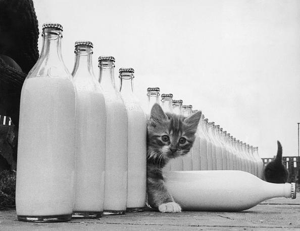 Kitten「Milky Paradise」:写真・画像(2)[壁紙.com]