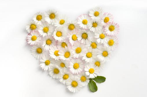 ハート「の花の背景にしています。」:スマホ壁紙(4)
