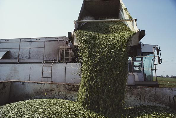 Harvesting「Birds Eye Pea Harvest」:写真・画像(9)[壁紙.com]