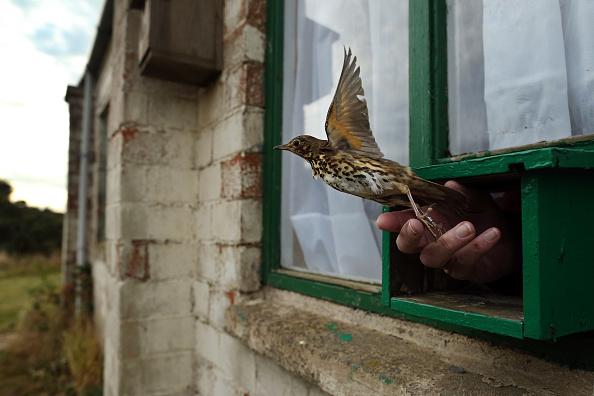 Environmental Conservation「Migratory Birds Are Ringed At Yorkshire Wildlife Trust's Spurn Point」:写真・画像(1)[壁紙.com]