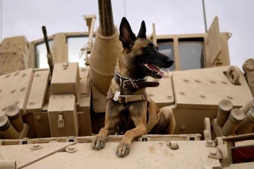 Military Land Vehicle「A dog sits atop U.S. Army tank.」:スマホ壁紙(0)