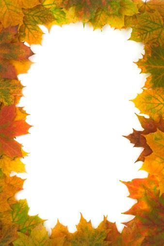 セイヨウカジカエデ「フレームの秋の葉」:スマホ壁紙(2)