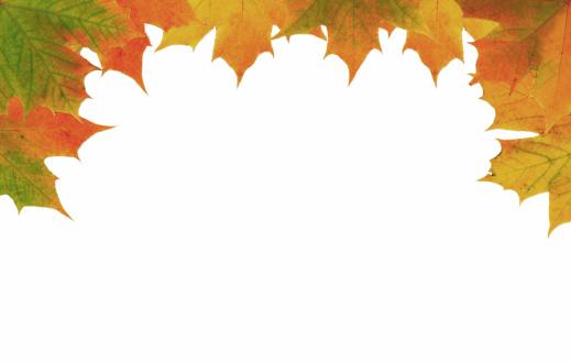 セイヨウカジカエデ「フレームの秋の葉、ホワイト」:スマホ壁紙(19)