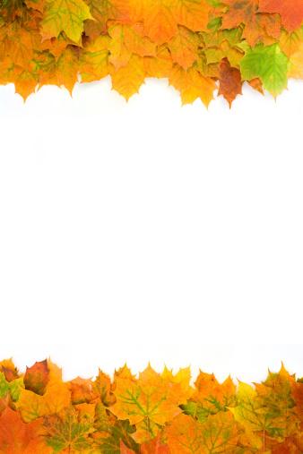 セイヨウカジカエデ「フレームの秋の葉、ホワイト、自然の影」:スマホ壁紙(19)