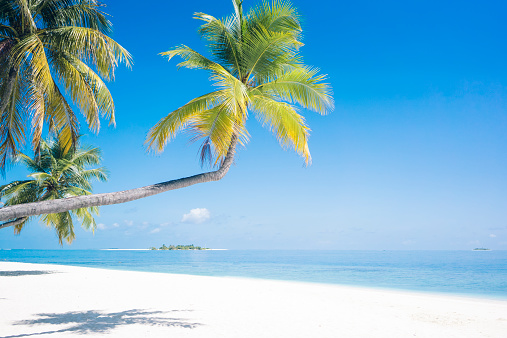 モルディブ「Maldives, Ari Atoll, view to palms and white sandy beach」:スマホ壁紙(15)