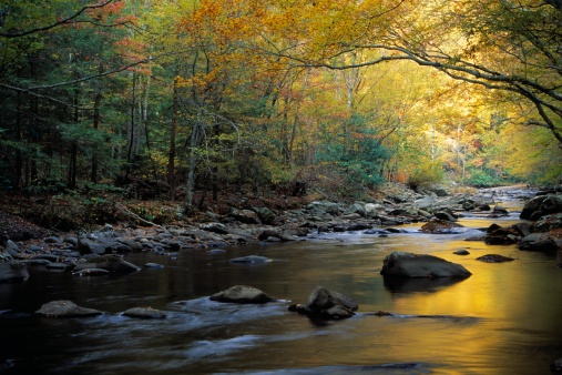 Tennessee「River flowing over rocks and branches among colorful fall foliage」:スマホ壁紙(17)