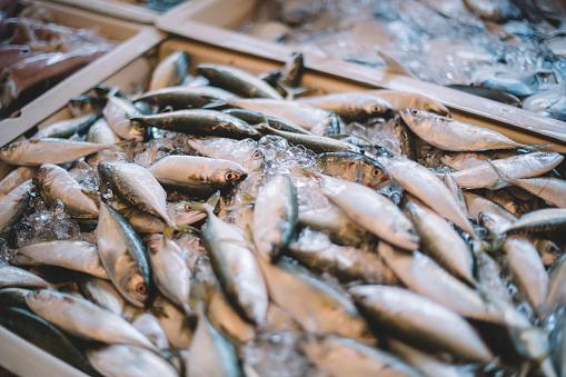 Sardine「Fresh fishes on ice」:スマホ壁紙(6)