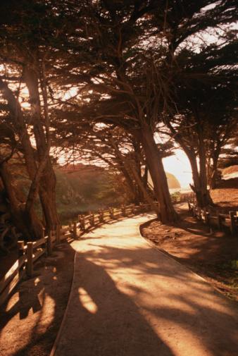 Big Sur「Footpath to beach,  evening, summer」:スマホ壁紙(17)