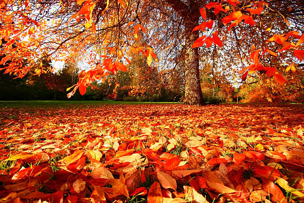 Fall in East Sussex, England:スマホ壁紙(壁紙.com)