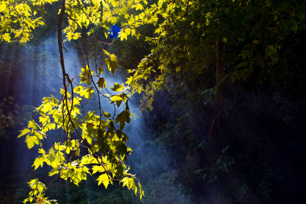 Sunbeam in woods:スマホ壁紙(壁紙.com)
