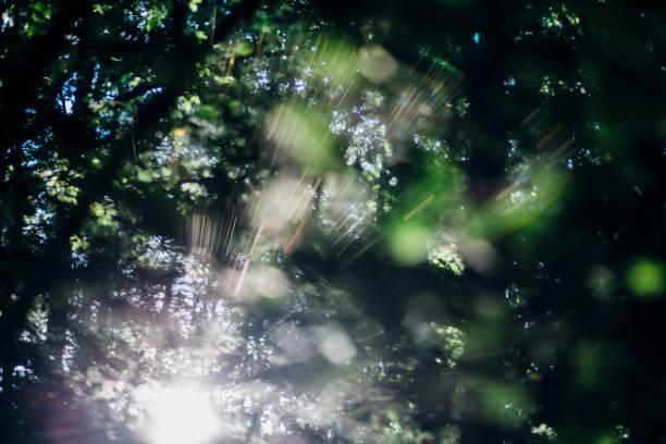 Sunbeam in forest:スマホ壁紙(壁紙.com)