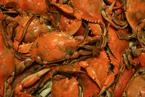 Claw「Cooked Chesapeake Bay Blue Crab Background seafood Pattern」:スマホ壁紙(9)