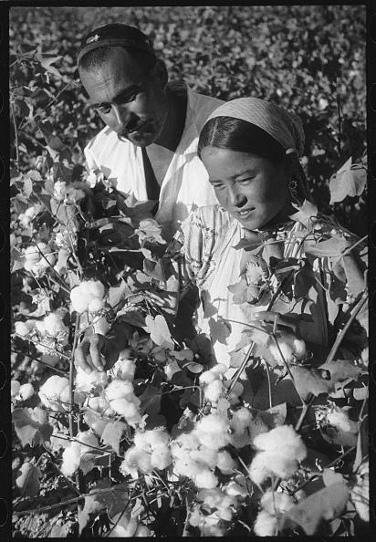 Uzbekistan「Cotton Pickers」:写真・画像(15)[壁紙.com]