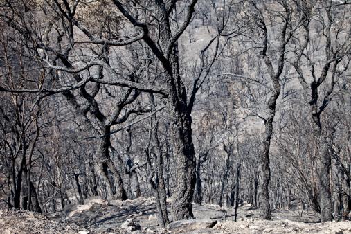 Deforestation「Spain, Agullana, Burned trees after forest fire」:スマホ壁紙(11)