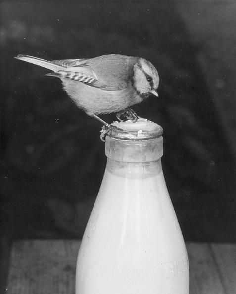 Beak「Caught In The Act」:写真・画像(14)[壁紙.com]
