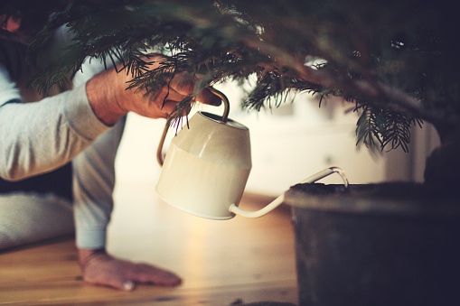 Human Hand「Male hands water a potted Christmas tree」:スマホ壁紙(5)