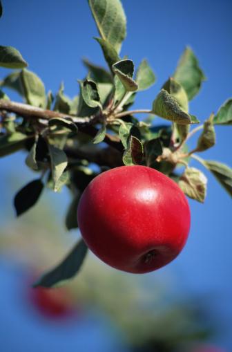 Garden Of Eden - Old Testament「Picturesque apple orchard」:スマホ壁紙(10)