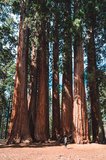"""Ecosystem「""""Learn character from trees, values from roots, and change from leaves."""" - Sequoia national park」:スマホ壁紙(1)"""