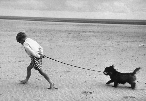 Walking「Walking The Dog」:写真・画像(17)[壁紙.com]