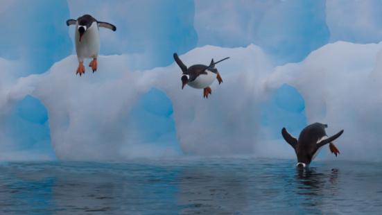 Gentoo Penguin「Digital Enhance Gentoo Penguin Diving into water」:スマホ壁紙(11)