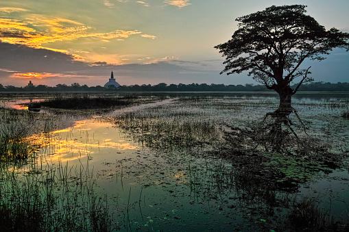 Sri Lanka「Sunrise at Anuradhapura」:スマホ壁紙(11)