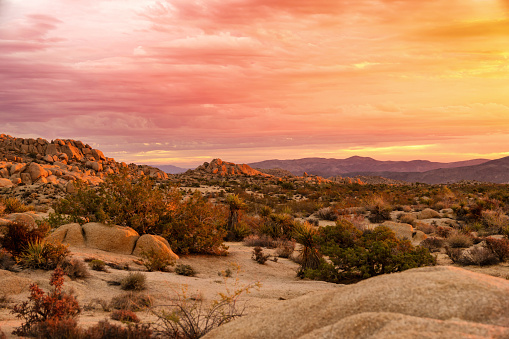 Hiking「Sunrise at Joshua Tree National Park」:スマホ壁紙(18)