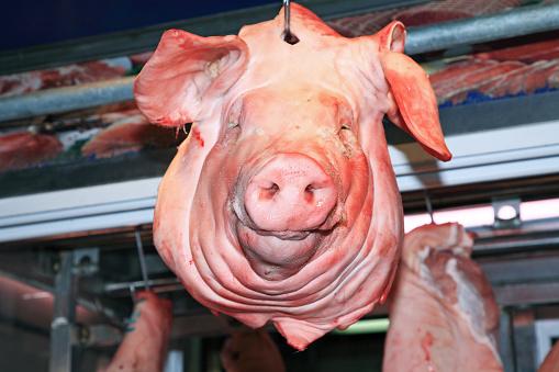 質感「Pig Head」:スマホ壁紙(2)