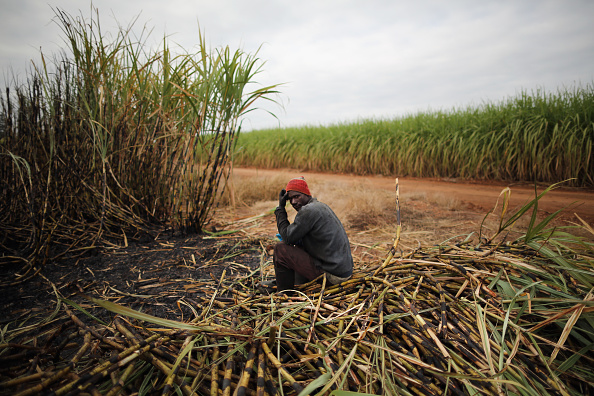 Land「Workers Harvest Sugar Cane」:写真・画像(4)[壁紙.com]