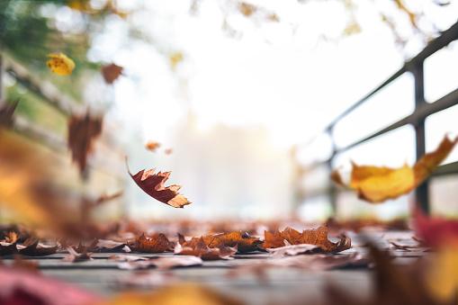秋「葉の完全な秋の道」:スマホ壁紙(11)