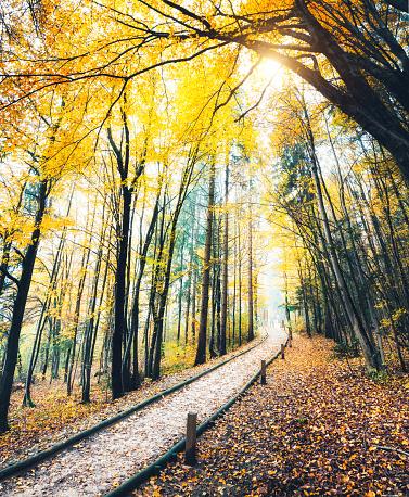 小道「秋のパス」:スマホ壁紙(4)