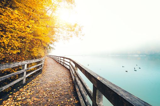 Footpath「Autumn Path Along The Lake」:スマホ壁紙(4)