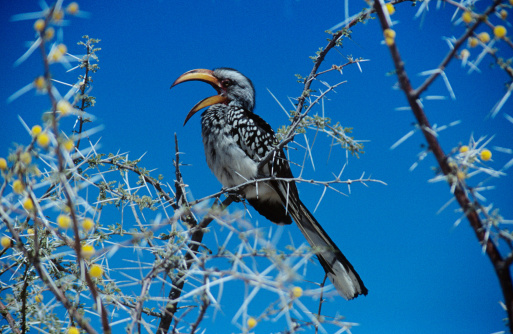 Beak「Yellow billed hornbill」:スマホ壁紙(1)