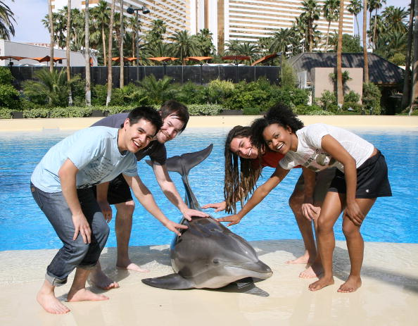 Aquatic Mammal「American Idol Contestants Visit LOVE」:写真・画像(17)[壁紙.com]