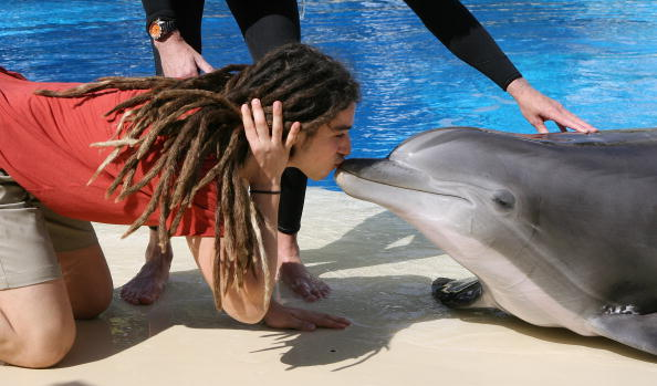 Aquatic Mammal「American Idol Contestants Visit LOVE」:写真・画像(5)[壁紙.com]