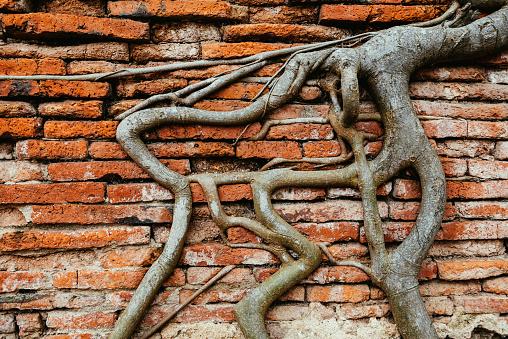 Archaeology「Thailand, Ayutthaya, Roots climbing through a brick wall at Wat Mahathat」:スマホ壁紙(15)