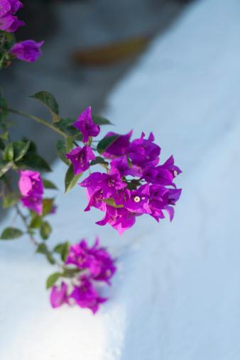 Sayulita「Blossoming Purple Flowers On A Branch」:スマホ壁紙(3)