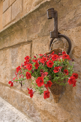 ペチュニア「Colorful petunias spilling from basket on stone wall, Pienza, Tuscany, Italy」:スマホ壁紙(8)
