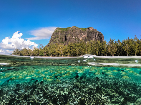 Mauritius「Amazing coastline on the indian ocean in Mauritius island」:スマホ壁紙(15)