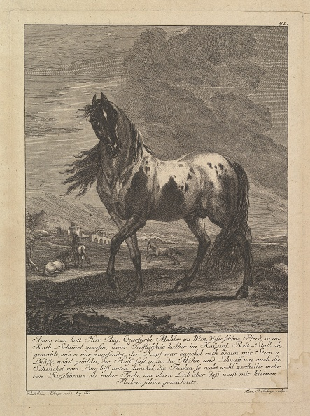 Etching「Horse」:写真・画像(8)[壁紙.com]