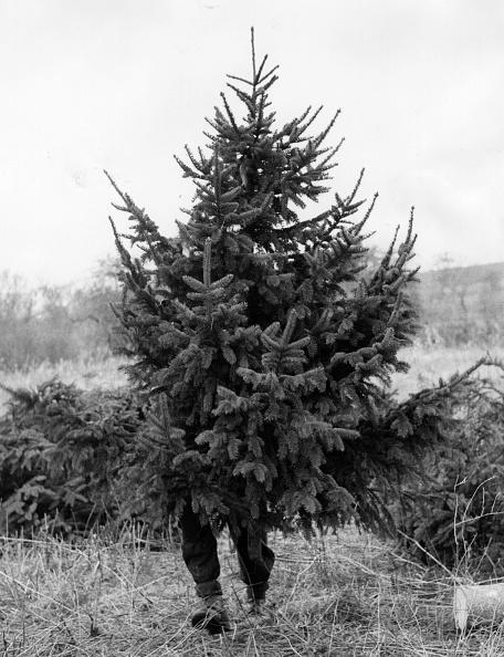 Scandinavia「Christmas Tree」:写真・画像(14)[壁紙.com]