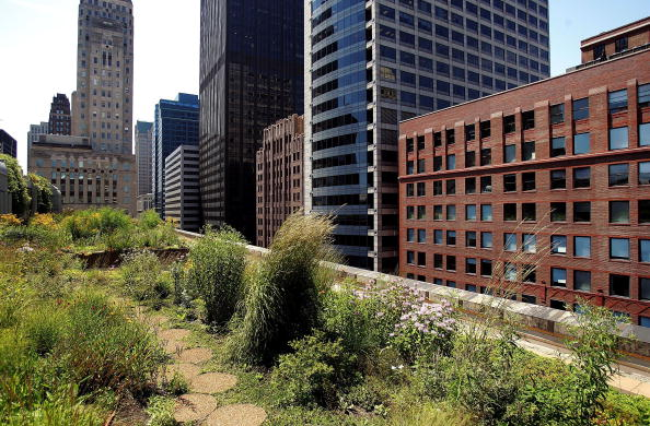 Rooftop「Green Rooftop Graces Chicago's City Hall」:写真・画像(8)[壁紙.com]