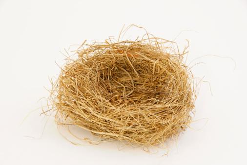 鳥の巣「Empty bird nest」:スマホ壁紙(15)