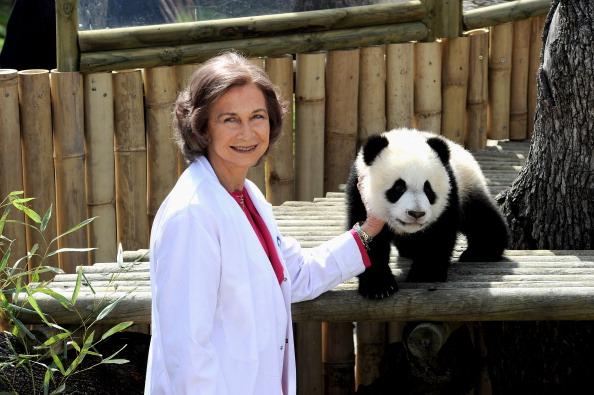 Queen Sofia of Spain「Queen Sofia of Spain Visit Panda Bears At The Madrid Zoo」:写真・画像(18)[壁紙.com]