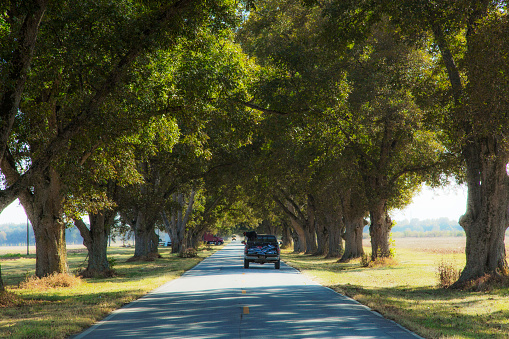 ペカン「truck driving through old growth pecan trees」:スマホ壁紙(9)