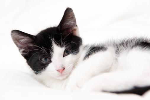 Kitten「A sleepy 9 week old kitten」:スマホ壁紙(11)