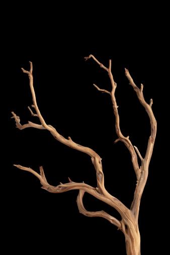 Driftwood「branch」:スマホ壁紙(11)