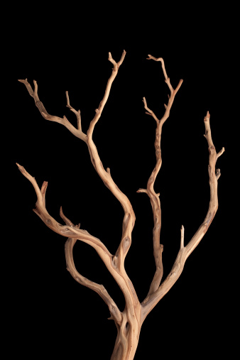 Driftwood「branch」:スマホ壁紙(6)