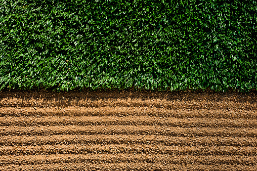 Grooming - Animal Behavior「Manicured Sports Field between turf and dirt」:スマホ壁紙(15)
